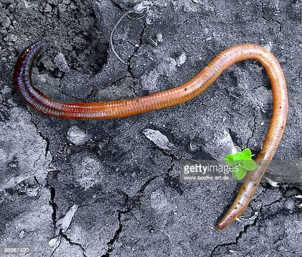 Earthworm Tribute