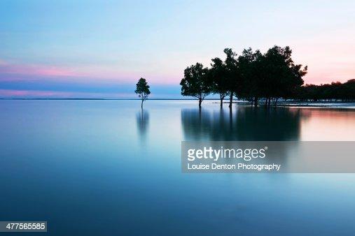 East Point mangroves