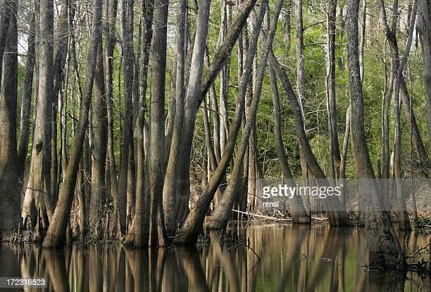 east texas swamp 2