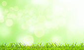 Easter concept. Green grass and blurred green background on a sunny day.