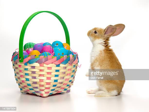 Easter bunny and basket of coloured eggs