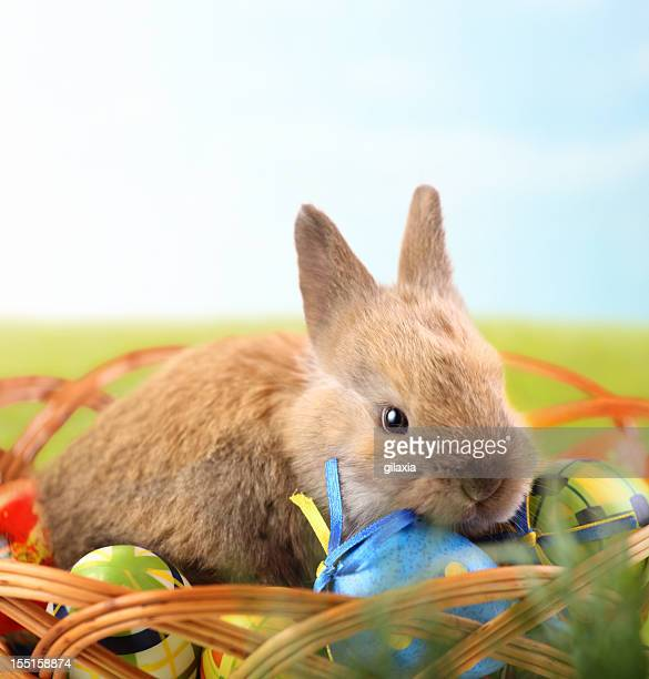 Easter bunny and eggs on a meadow