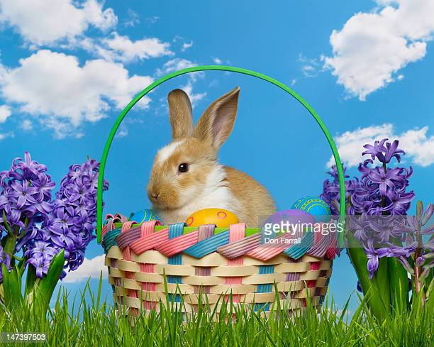 Easter bunny in a basket in the grass