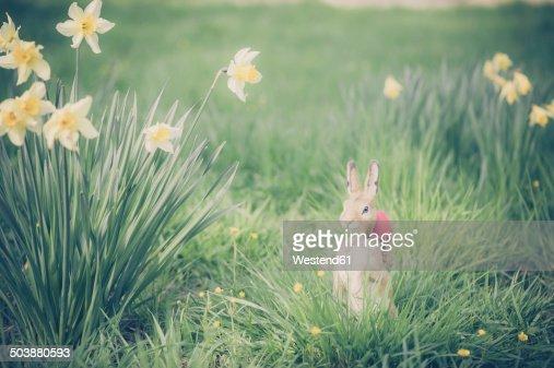 Easter bunny in garden