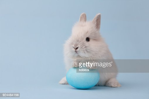 Easter bunny with egg on blue background : Stock Photo