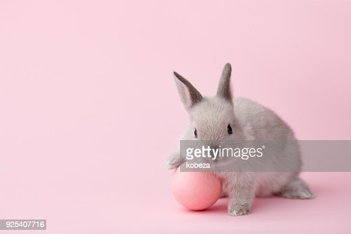 Easter bunny with egg on pink background : Stock Photo