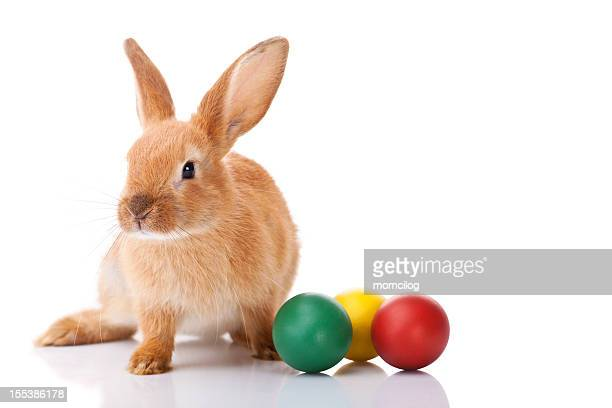 Easter bunny with three Easter eggs