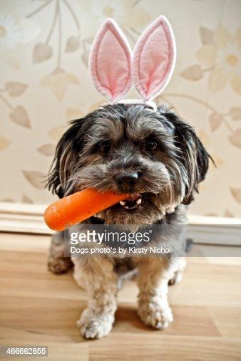 Easter Dog : Stock Photo