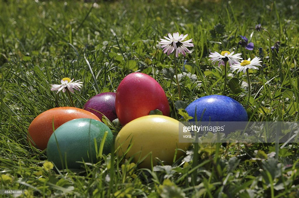 Easter eggs and daisies : Stock Photo