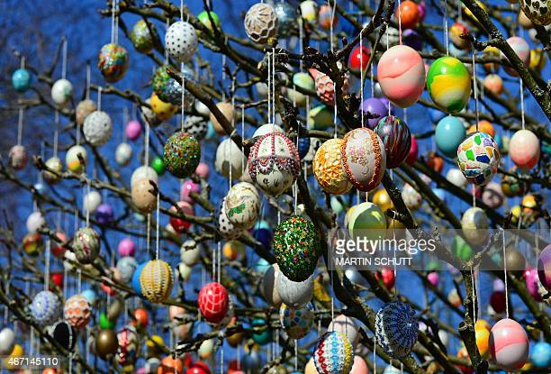 Easter eggs decorate a tree in a garden in Saalfeld eastern Germany on March 19 2015 Around 10000 colorful eggs will hang on the tree until Easter...
