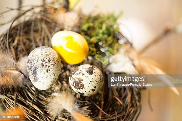 Easter Eggs In Nest, Osijek, Croatia, Europe