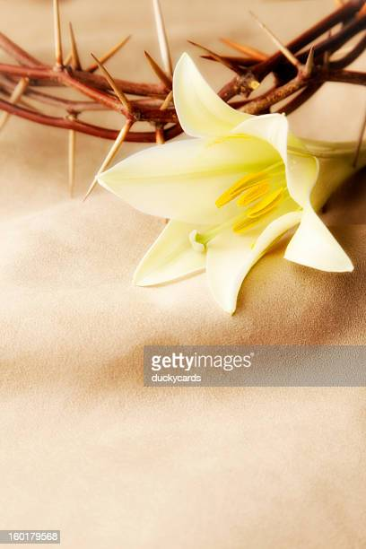 Easter Lily and Crown of Thorns