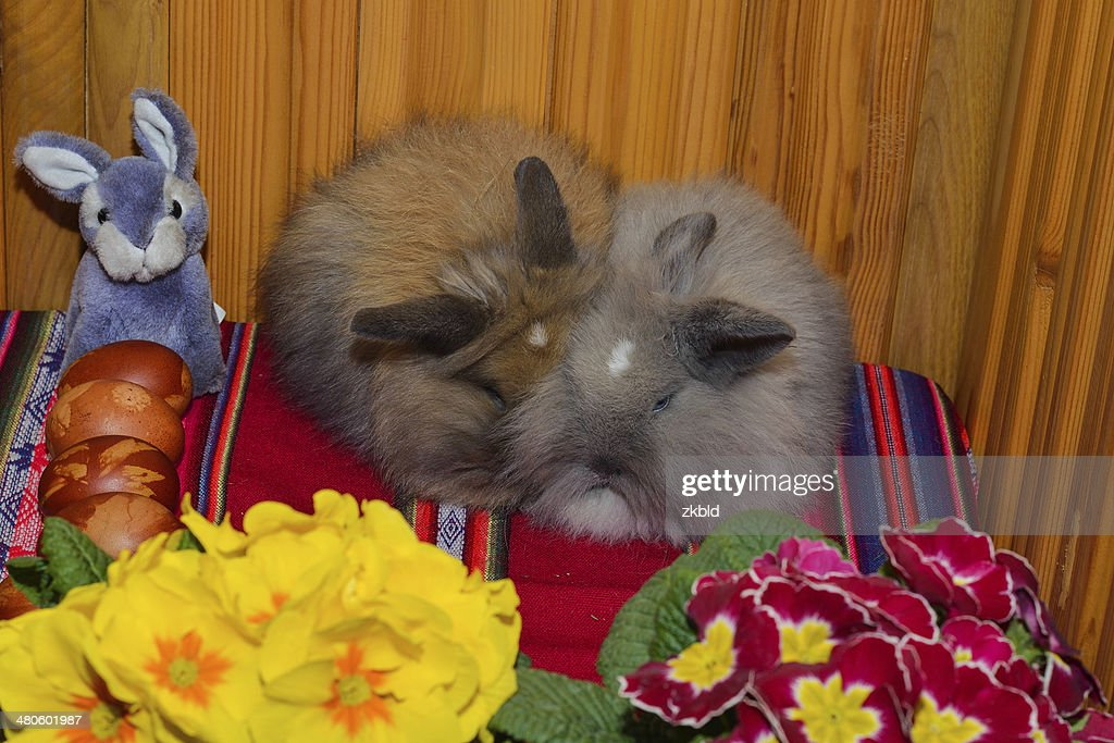 Easter rabbits with Easter eggs : Stock Photo