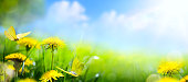 Easter spring flower background; fresh flower  on green grass background
