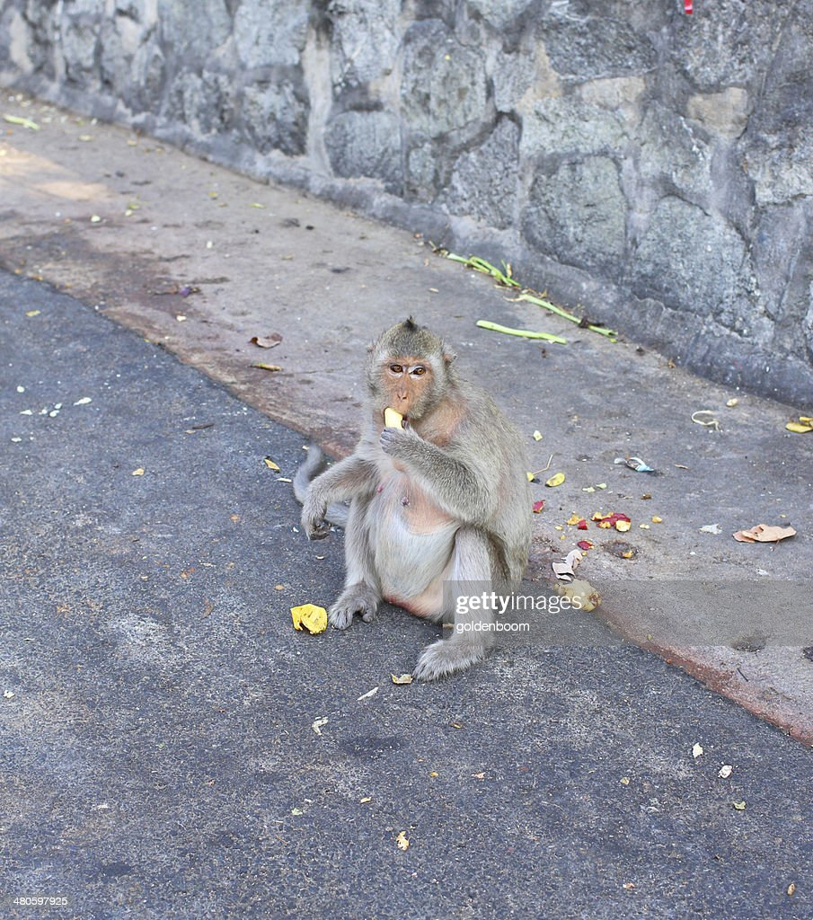 eating banana monkey in the zoo : Stock Photo