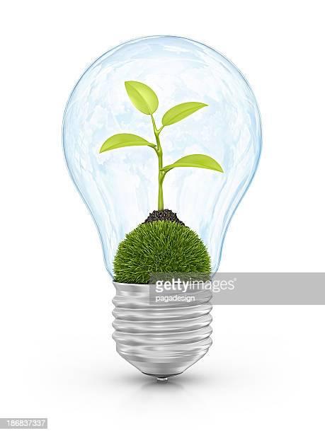 Bombilla de luz eco