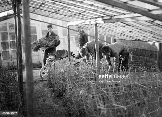 Ecole d'horticulture devenue un centre de plantation de primeurs et de légumes à Antibes France en 1942