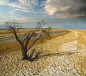 withered dead tree in desert landscape background