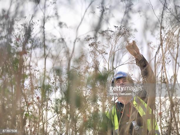 Ecologist Inspecting Plants