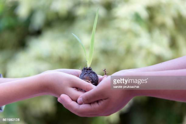 Ecology concept. Conceptual close up environment photo ,Hands of child  holding a young plant against a green natural background in spring. Ecology concept .
