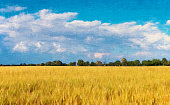 Ecology concept: sustainable World. Natural landscape with cultivated wheat and blue cloudy sky painted on canvas. XXXL size image.