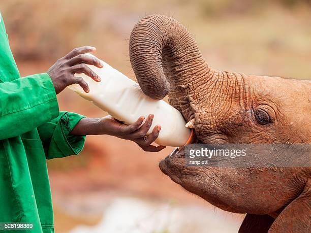 Ecotourism with Elephants