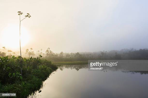 Ecuador, Amazon River region, fog over Lake Pilchicocha