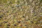 Ecuador Galapagos Island Floreana Island Trees On Hillside