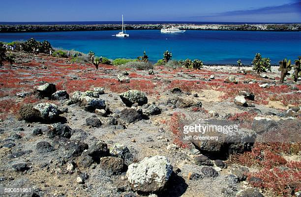 Ecuador Galapagos South Plaza Island Red Sessuvium During Dry Season And Prickly Pear Cactus Beyond Boats In Harbor Desert