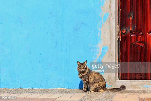 Ecuador, Guayaquil, cat sitting in front of light blue facade