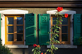 red roses on framework facade with window green shutters on a sunny summer morning in south germany city schwaebeisch gmuend