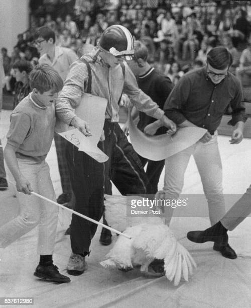 Eddie Foster left the trainer prods the bird while the chaser Roger Perricone flaps his large paper wings to make the turkey move They represented...