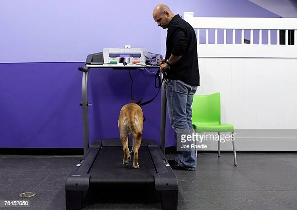 Eddie Panzano takes Kaya for a walk on the treadmill at Chateau Poochie the luxury hotel for dogs and cats December 13 2007 in Pompano Beach Florida...