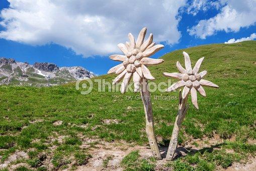 edelweiss sculpture dans les alpes dallg u photo thinkstock. Black Bedroom Furniture Sets. Home Design Ideas