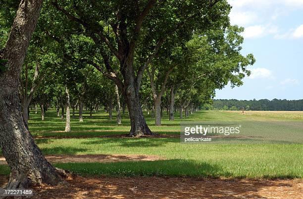 Rand der Orchard