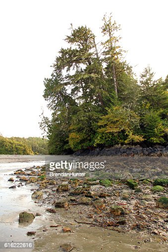 Edge of the Tofino Island : Stock Photo