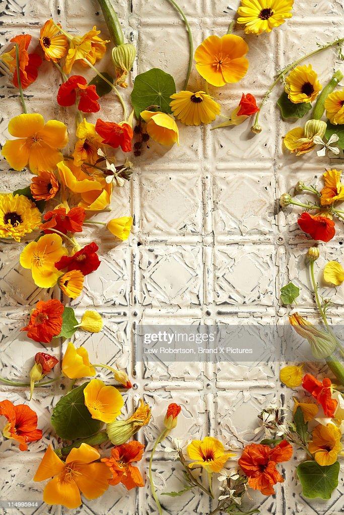 Edible Flowers : Stock Photo