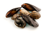 Edible molluscs (Mediterranean mussel and Japanese littleneck) on a white background