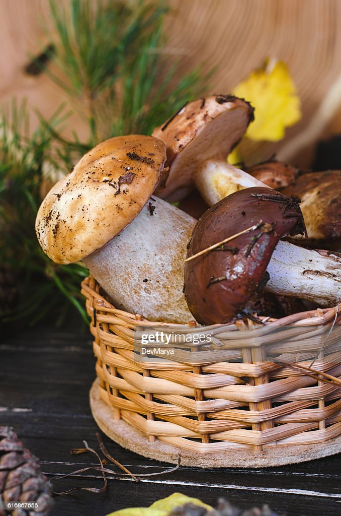 Edible mushrooms collected in the forest. : Stock Photo