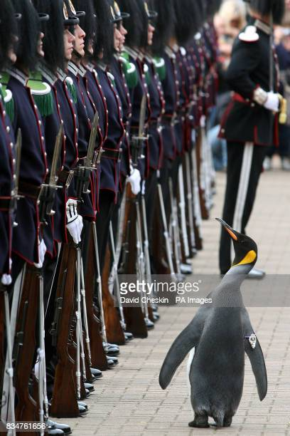Edinburgh Zoo penguin and ColonelinChief of the Norwegian King's Guard Nils Olav inspects his regiment as they visit him in Edinburgh where he was...