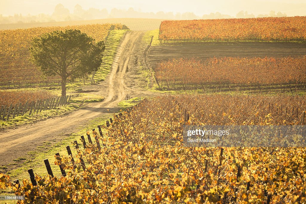Edna Valley wine area : Stock Photo