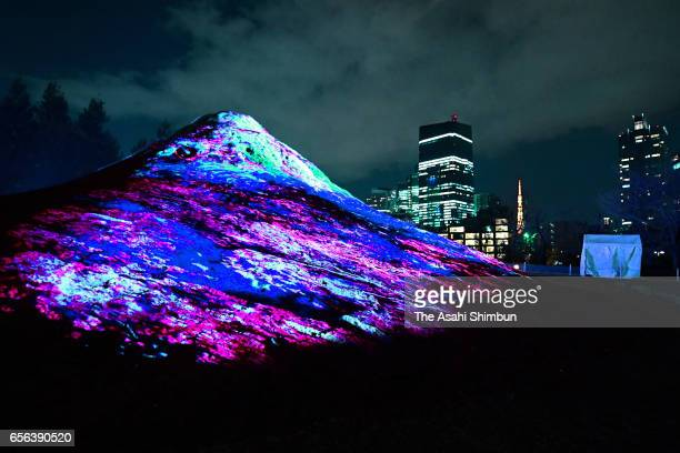 'EdoFuji' is illuminated during the press preview of the Midtown Blossom at Tokyo Midtown on March 16 2017 in Tokyo Japan