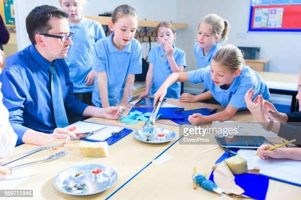 Education UK Primary School Science Lesson