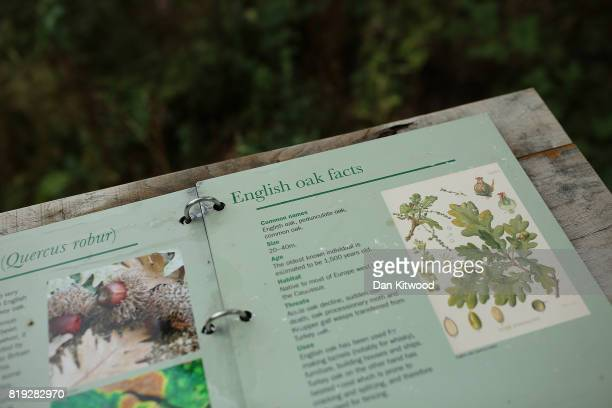 Educational material during a photocall at Kew Gardens on July 20 2017 in London England The Kew Gardens Summer festival includes a newly opened 16...