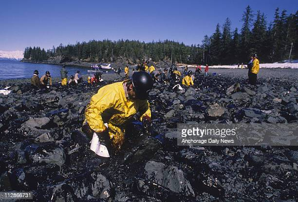 Edward Jones of Valdez wipes oil off of the rocks on the shoreline of Cabin Bay on Naked Island in Prince William Sound on April 13 after the oil...
