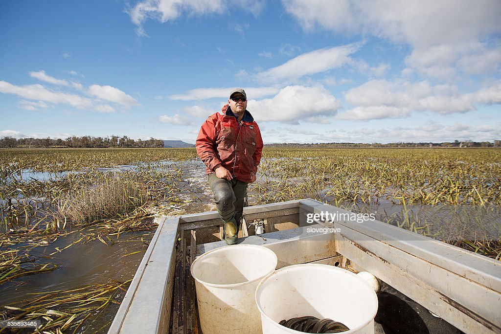 Eel Fisherman : Stock Photo