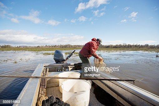 Enguia Pescador : Foto de stock