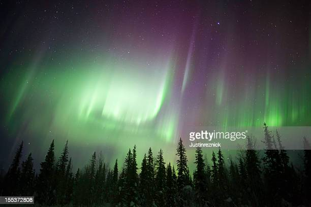 Eerie green twilight view of Aurora Borealis over forest
