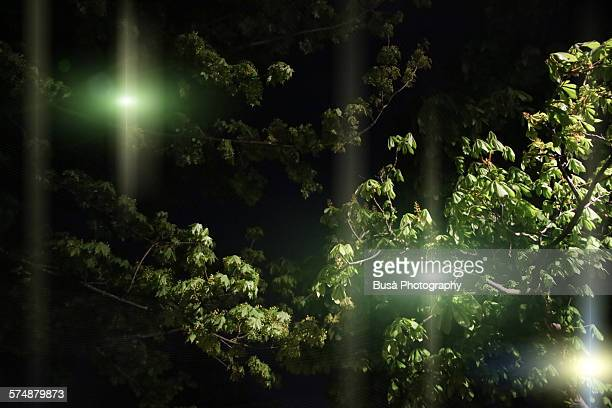 Eerie lights in the woods at night