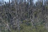 Effects of acid rain on vegetation Terra Nova National Park Canada